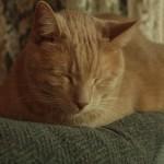 """""""Cat Nap"""""""